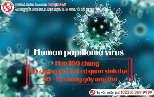 virut hpv